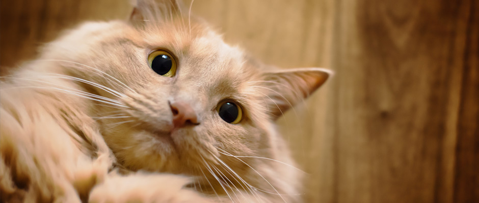 Kittenish: A Book of Cat Selfies | Vancouver East Veterinary Walk-In Clinic