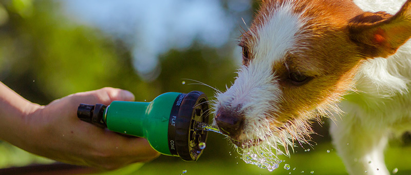 Summertime Tips For Dogs: Hose | Vancouver East Veterinary Walk-In Clinic