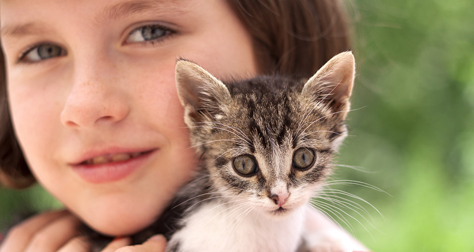 Vancouver Orphan Kitten Rescue Association | Vancouver East Veterinary