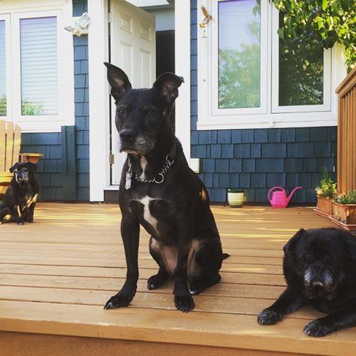 east-van-dogs-jada-petey-finn-vancouver-east-veterinary