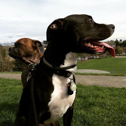 east-van-dogs-kelly-jamie-vancouver-east-veterinary