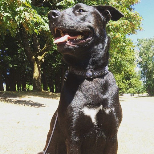 east-van-dogs-mable-vancouver-east-veterinary
