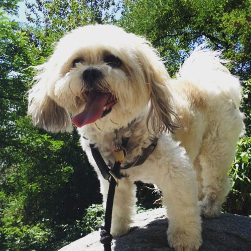 east-van-dogs-max-vancouver-east-veterinary
