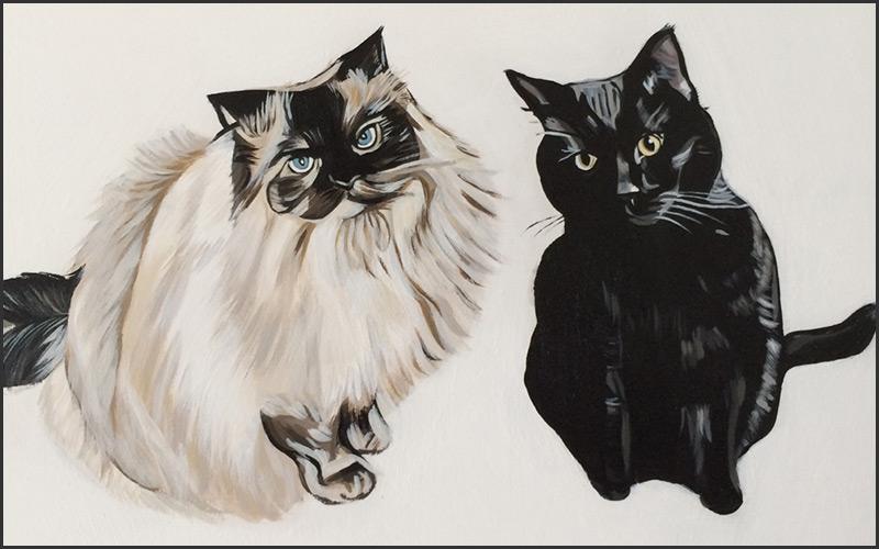 petsy-studio-cats-vancouver-east-veterinary