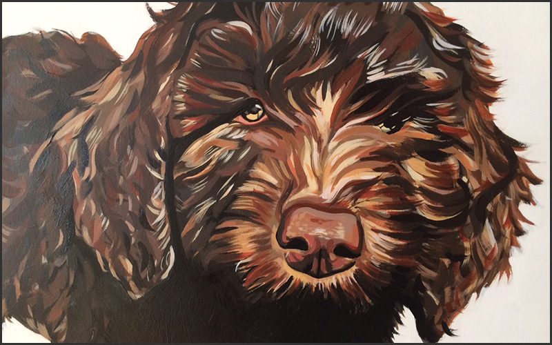 petsy-studio-terrier-vancouver-east-veterinary