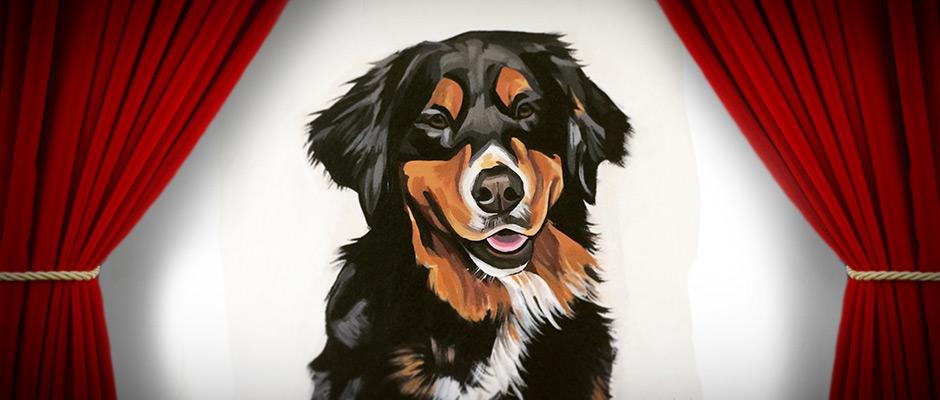 Petsy Studio: Feature | Vancouver East Veterinary