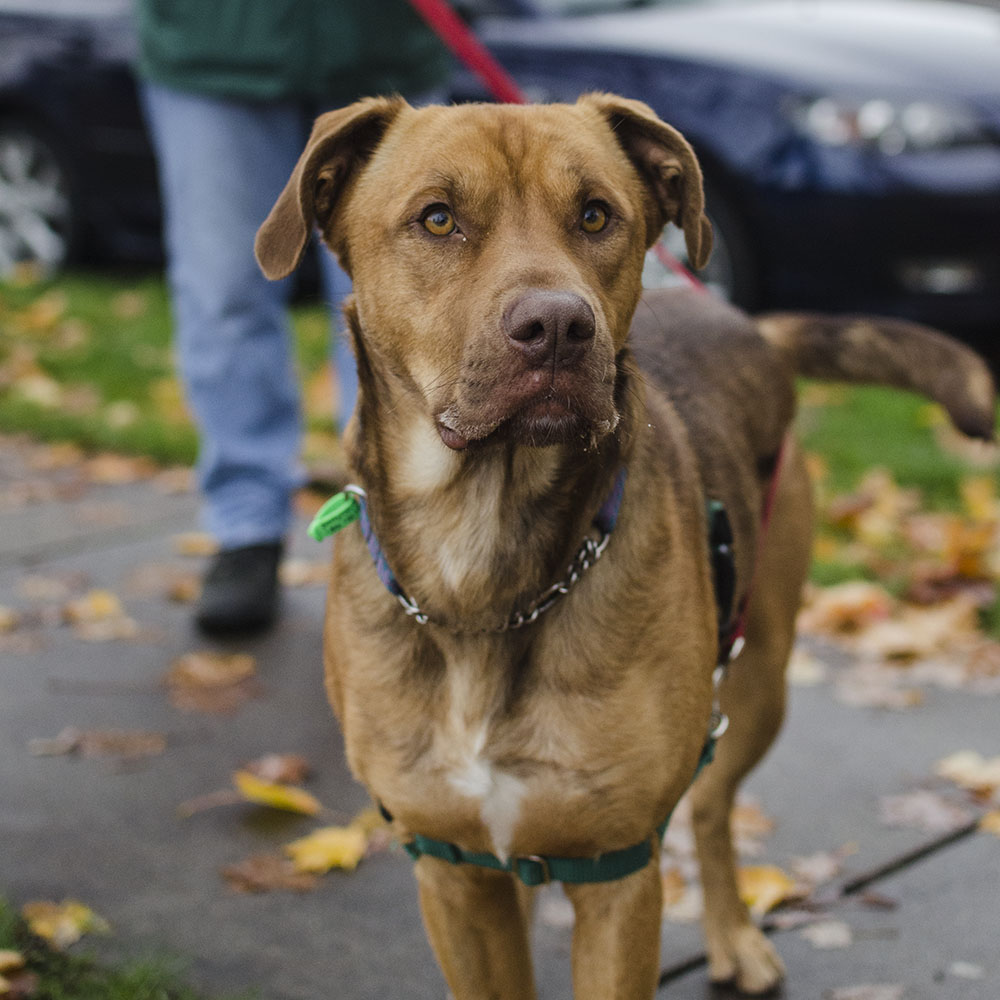 BC-SPCA Vancouver : Grizzy - Vancouver East Veterinary