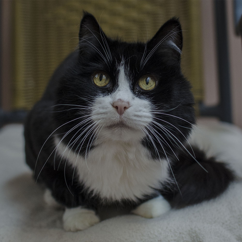 BC-SPCA Vancouver : Wednesday & Angie - Vancouver East Veterinary