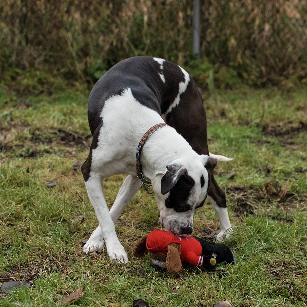 BC-SPCA BURNABY : JEWEL - Vancouver East Veterinary
