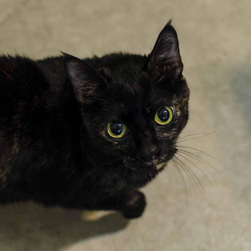 BC-SPCA Abbotsford : Autumn - Vancouver East Veterinary