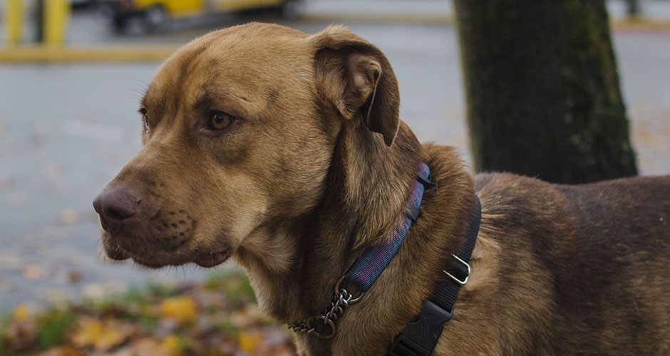 BC-SPCA Vancouver : Grizzly | Vancouver East Veterinary