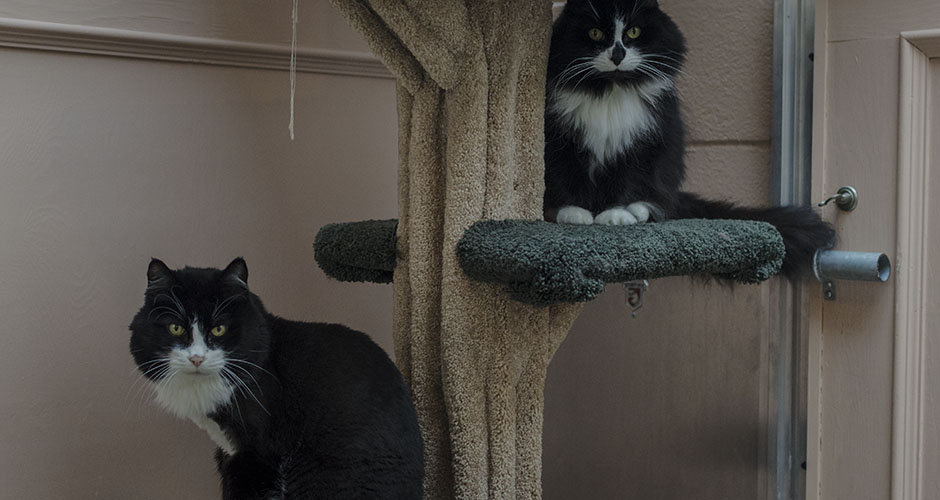 BC-SPCA Vancouver : Wednesday & Angie | Vancouver East Veterinary